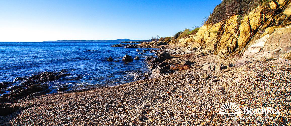 France - Var -  Roquebrune-sur-Argens - Beach Actinies